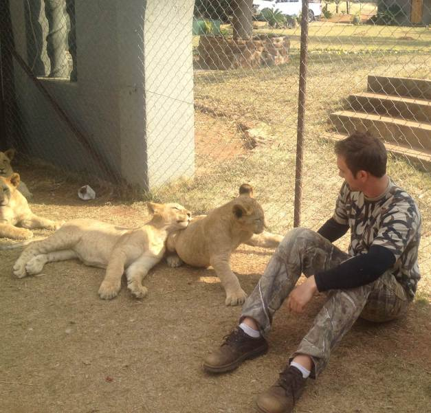 Noahs Kittens